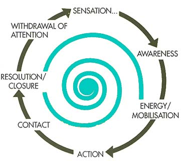 Surf Therapy Gestalt Cycle of Contact
